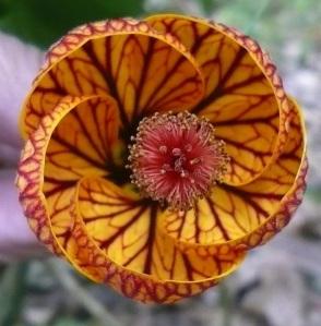 flora spriral